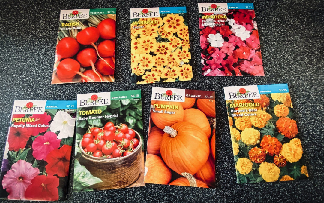 Dreaming Of Spring - Today's sunny and bright weather was infectious. When we did our weekly shopping I got carried away at the seed display.