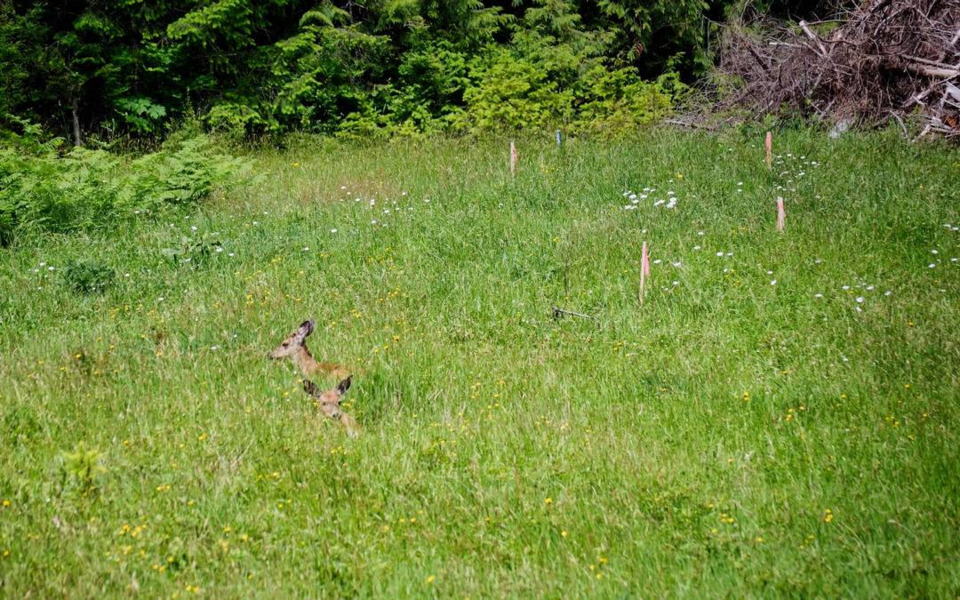 Taking A Break - Been thinking about mowing this field. Starting to get a bit overgrown. But lately some of our deer friends have been resting in that same spot. So, mowing can wait.